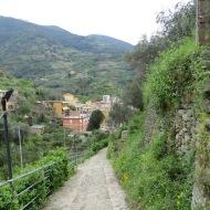 terraced land